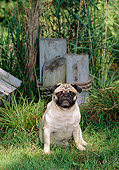 DOG 05 CE0057 01