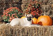 DOG 05 CE0059 01