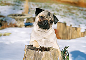 DOG 05 CE0060 01