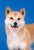 DOG 05 FA0014 01