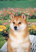 DOG 05 FA0016 01