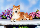 DOG 05 FA0017 01