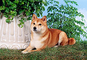 DOG 05 FA0018 01