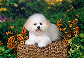 DOG 05 FA0021 01
