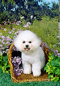 DOG 05 FA0023 01