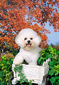 DOG 05 FA0024 01