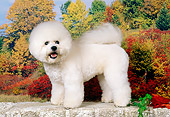 DOG 05 FA0025 01
