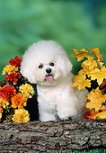 DOG 05 FA0028 01