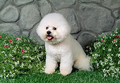 DOG 05 FA0029 01