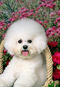 DOG 05 FA0032 01