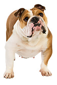 DOG 05 GL0007 01