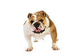 DOG 05 GL0008 01