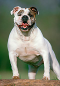 DOG 05 GR0009 01