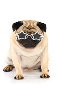 DOG 05 JD0001 01