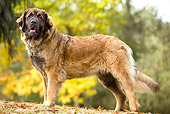 DOG 05 JE0001 01