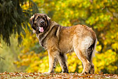 DOG 05 JE0002 01