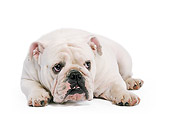 DOG 05 JE0012 01