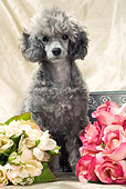 DOG 05 JE0015 01