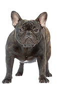 DOG 05 JE0016 01