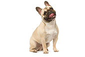 DOG 05 JE0017 01