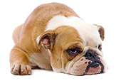 DOG 05 JE0018 01