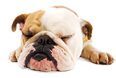 DOG 05 JE0020 01