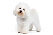 DOG 05 JE0021 01