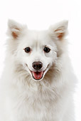 DOG 05 JE0023 01