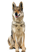 DOG 05 JE0025 01