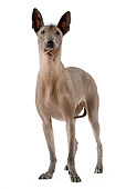 DOG 05 JE0029 01