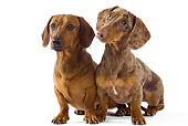 DOG 05 JE0030 01