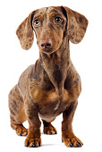 DOG 05 JE0032 01