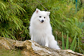 DOG 05 JE0033 01