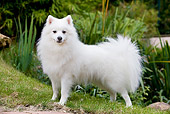 DOG 05 JE0034 01