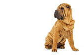 DOG 05 JE0038 01