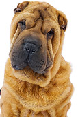 DOG 05 JE0039 01