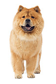 DOG 05 JE0040 01