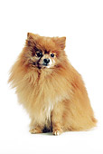 DOG 05 JE0045 01