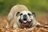 DOG 05 JE0052 01