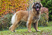 DOG 05 JE0056 01