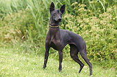 DOG 05 JE0060 01