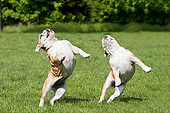 DOG 05 JE0065 01