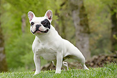 DOG 05 JE0067 01