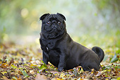 DOG 05 JE0073 01