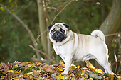 DOG 05 JE0075 01