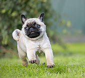 DOG 05 JE0077 01