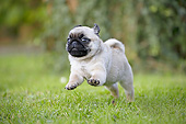 DOG 05 JE0078 01