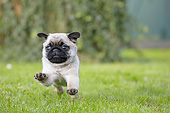 DOG 05 JE0079 01