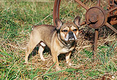 DOG 05 JN0001 01