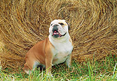 DOG 05 JN0002 01
